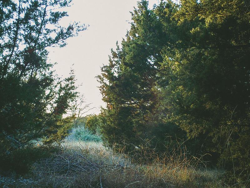 Backyard Nature Cam - Jan 11, 2018, 5:30pm