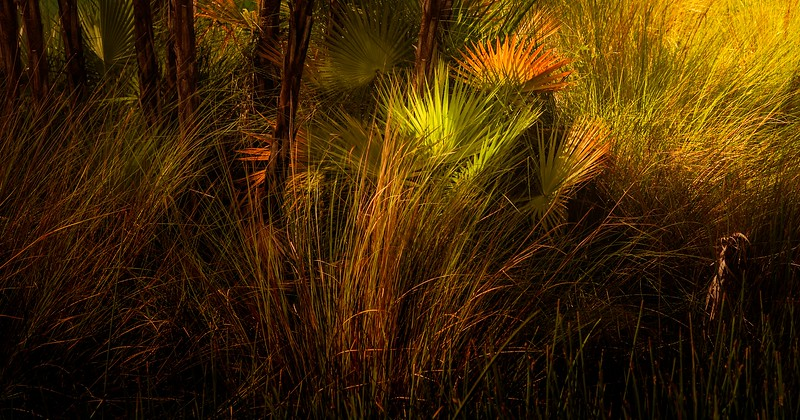 The Magic of Light-396.jpg