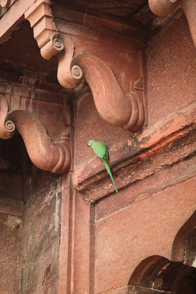 A colorful bird on the wall of the fort.