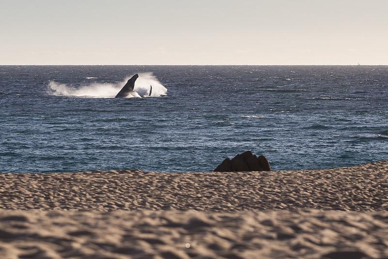 www.bernardomartinezphoto.com- Cabo Wedding-89.jpg