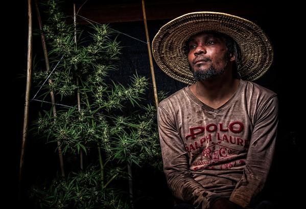 Coral Cove Cannabis Retreat , Little Bay Jamaica