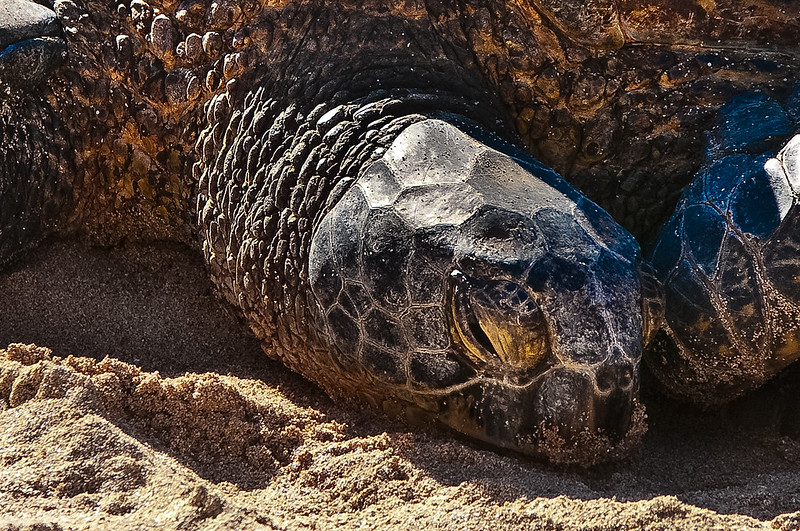 Turtle Bay Oahu close up-8766.jpg