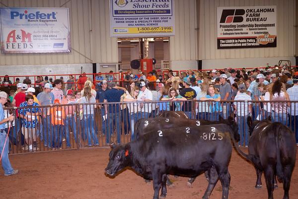 OSU Beef Field Day