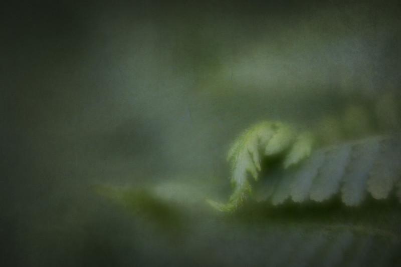 windy_day-1-5.jpg