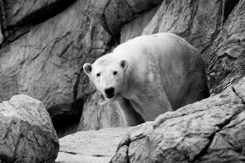 NC Zoo_51012180.jpg