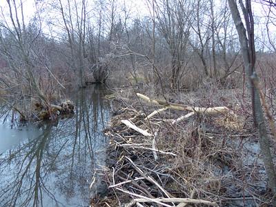 20121214 Beaver Dam