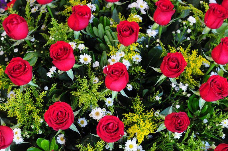 Roses_6688.jpg