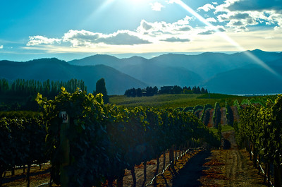Wineries Around Lake Chelan