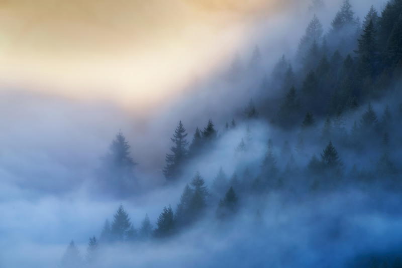 Forests in the Mist
