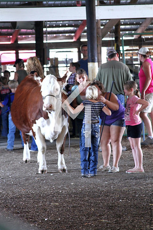 2012 Boone County - Cattle open show