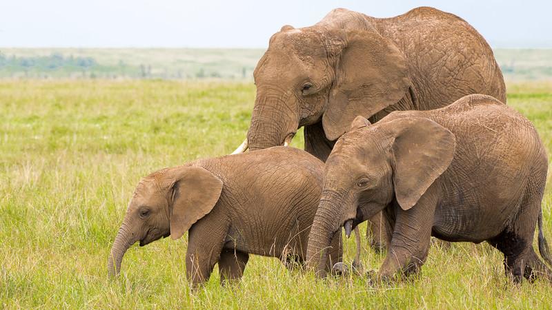 Elephants-0218.jpg