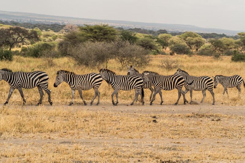 Tanzania_Safari-best-16.jpg