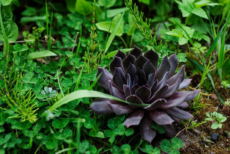 2015-05-17_Garden_006.jpg