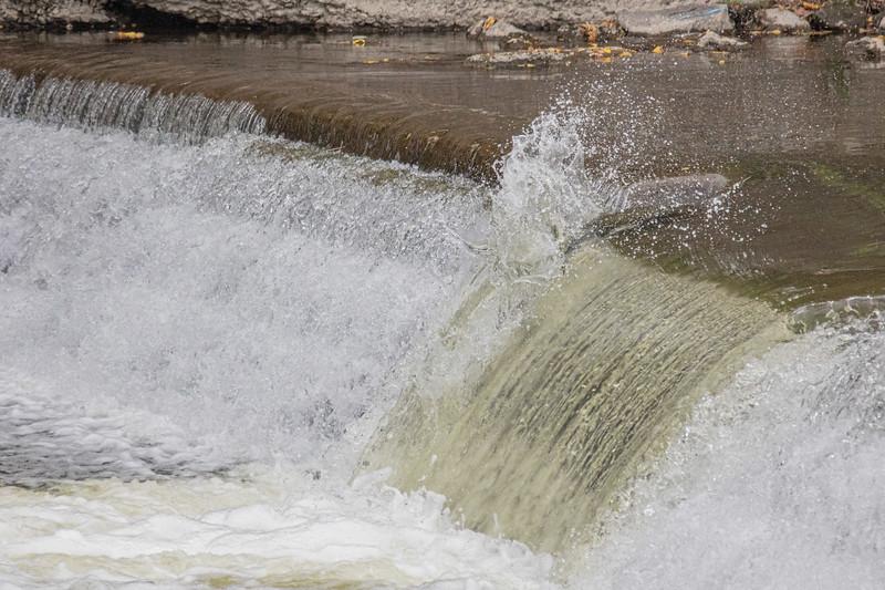 salmon upstream (30 of 48).jpg