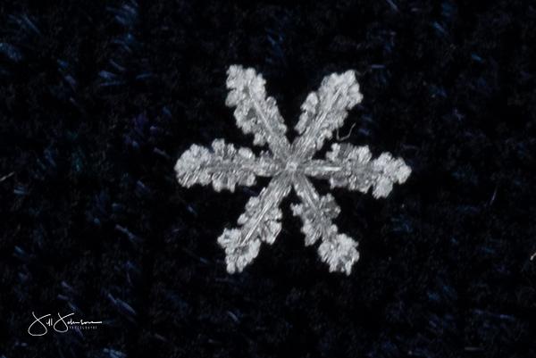snowflakes-2421.jpg