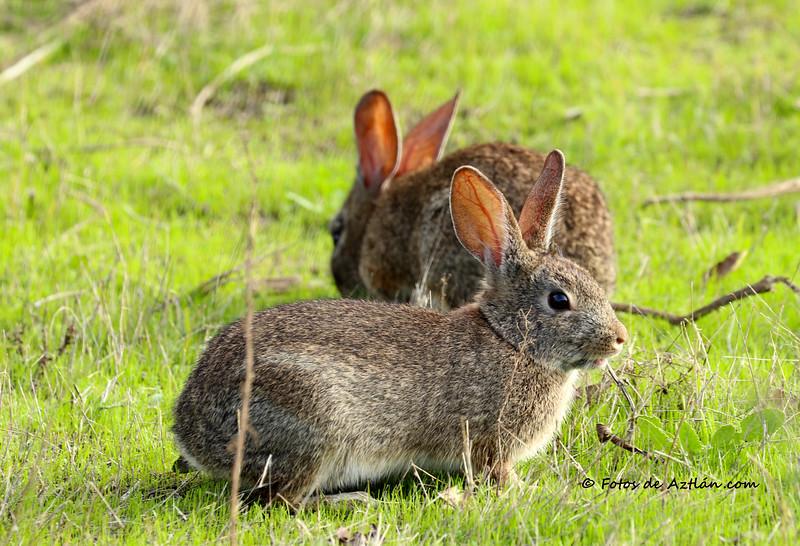 Rabbits IMG_0666.jpg