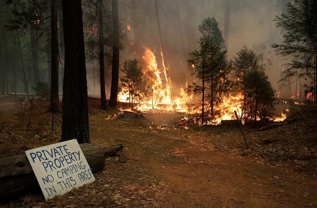 . Trees burn as firefighters continue to battle the Rim Fire near Yosemite National Park, Calif., on Sunday, Aug. 25, 2013.AP Photo/Jae C. Hong)