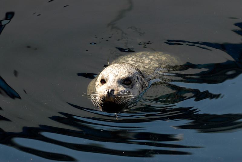 070904 8422 Canada - Victoria - Feeding seals and Mount Douglas _F _E ~E ~L.JPG