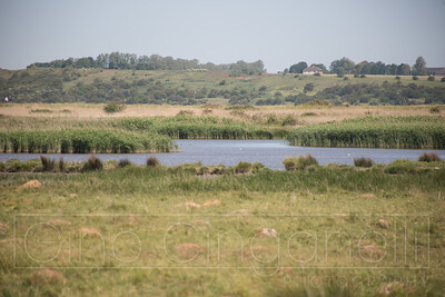 Oare Marshes and Nature Reserve