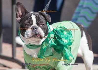St. Patricks Day Pet Contest