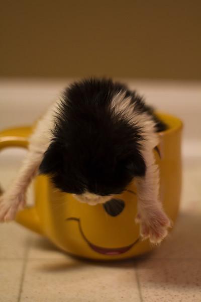 Kittens-9943.jpg