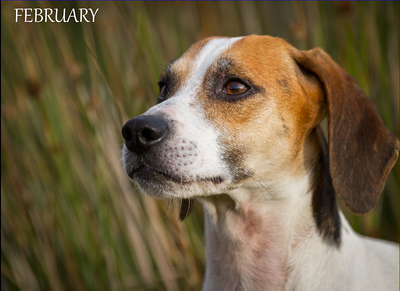 CLARO BEAGLES SAMPLE CALENDAR