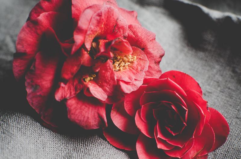 Flowers-28.jpg