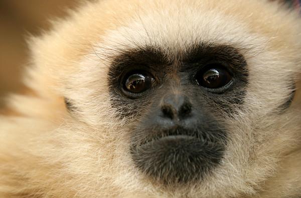 monkey two.jpg