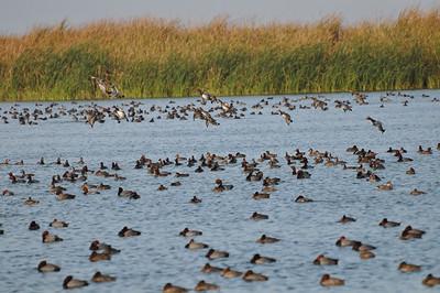 Port Aransas Birds