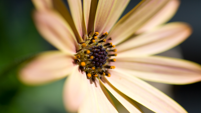 Flowers2 1920x1080 (1).png