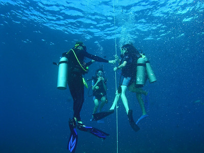 Dive BVI Scuba Mountain Point, Coral Gardens