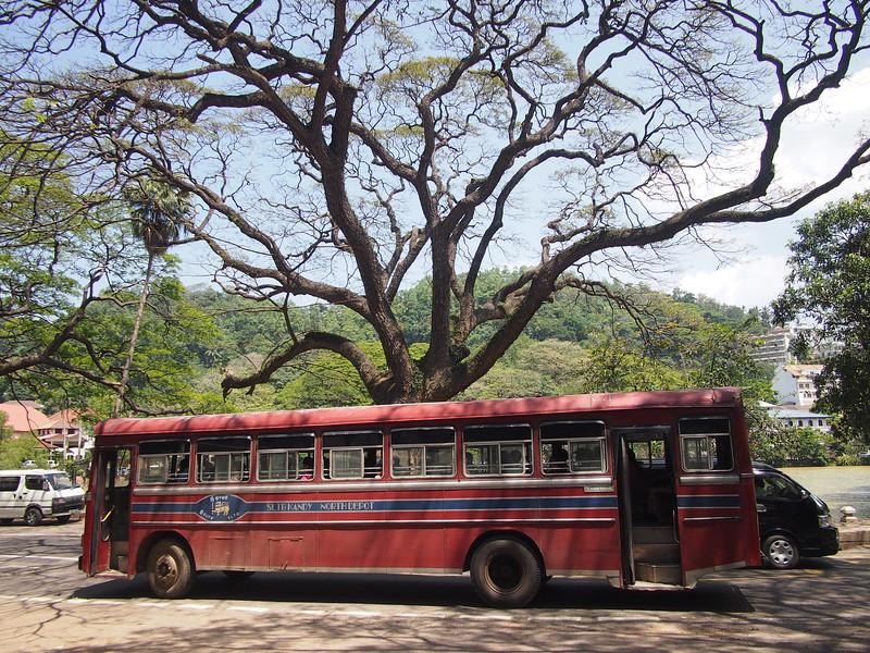 P2148313-lake-tree-and-bus.JPG