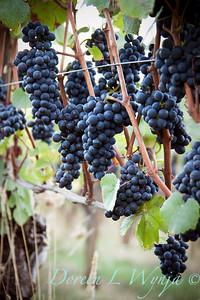 Vineyards, Grapes & Wine