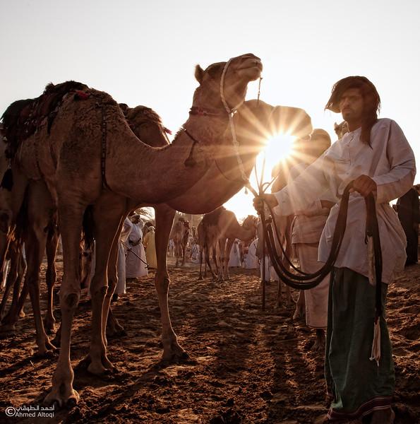 Camel Race  (27).jpg