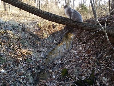 2.2 Lower pond spillway