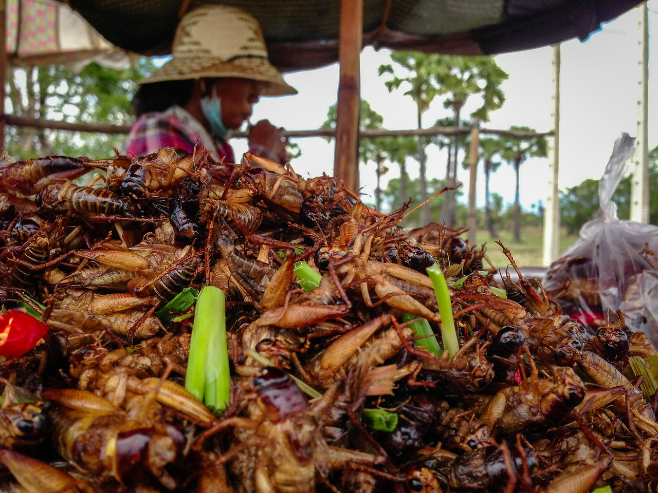Vendor Selling Edible Crickets by the Road in Cambodia