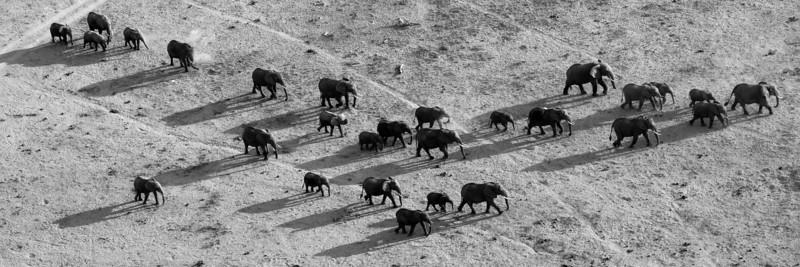 Elephants, Amboseli NP, Kenya