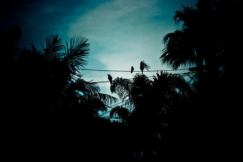 © Jill Sutherland 2012--32.jpg