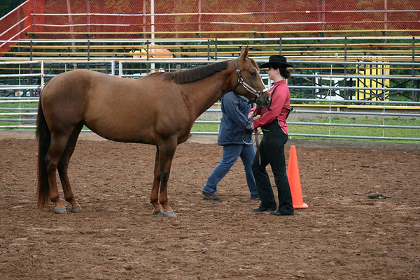 Class 32 Western Novice Fitting and Horsemanship