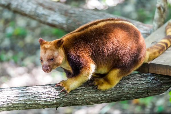 2018-10-19 Currumbin Wildlife Sanctuary