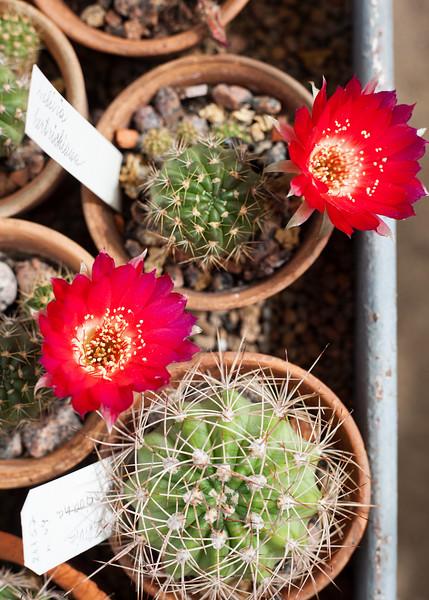 2016-06-10_Cactus_Greenhouse_028.jpg