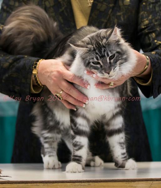 CatShow2014102.JPG