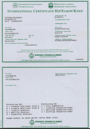 Zippo Certificates