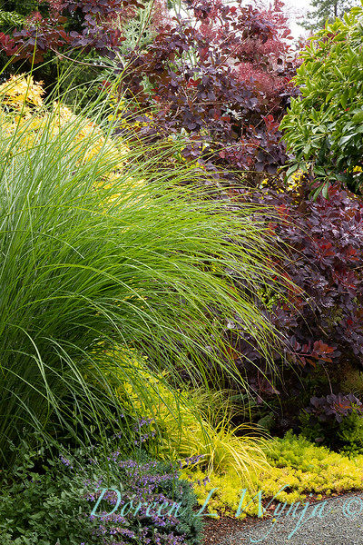Stacie Crooks - a garden of color and texture_2041.jpg