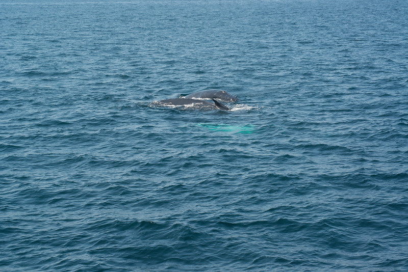humpbacks-4186.jpg