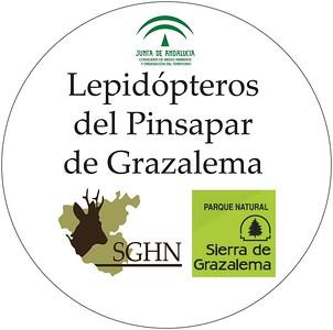 Proyecto Lepidópteros del Pinsapar de Grazalema