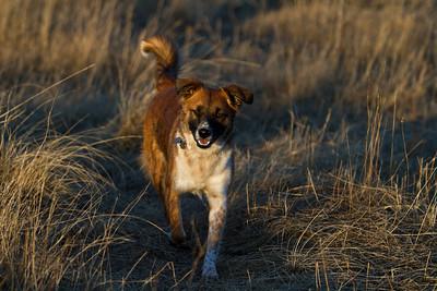 Misty - Rice Creek Dog Park