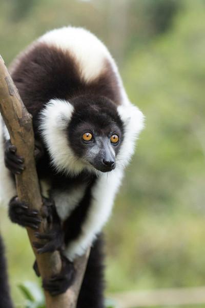 Madagascar_2013_IG3A2576.jpg
