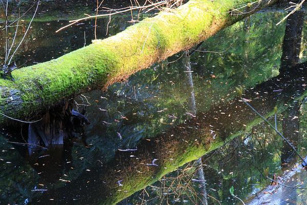 Redmond Watershed