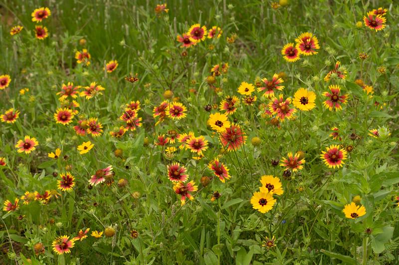 Prairie View 1 May 2020-04893.jpg